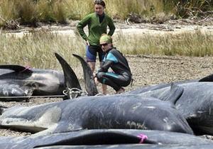 В Новой Зеландии около 60 черных дельфинов выбросилось на берег