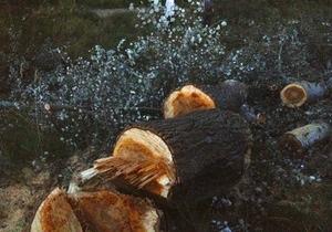 Неизвестные вырубили пять гектаров деревьев на Жуковом острове - УП