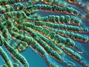 Ученые: Токсичные водоросли могут уничтожить жизнь на Земле
