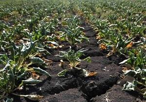 В США суд запретил выращивание ГМО-свеклы
