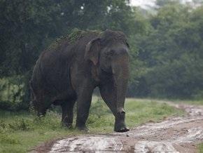 Британское правительство запретило продавать слонов в зоомагазинах