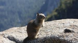 Гостей парка Йосемити предупредили об опасном вирусе