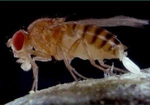 Светящаяся сперма обещает прояснить механизмы эволюции