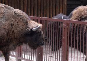В МВД заявили, что причина смерти животных в Киевском зоопарке пока неизвестна