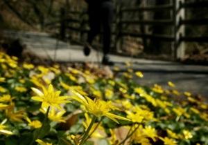 Американец признался в краже цветов спустя полвека