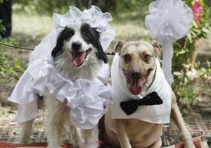 В Киеве состоялась первая собачья свадьба