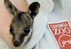 Австралийцев возмутили чипсы со вкусом кенгуру и страуса