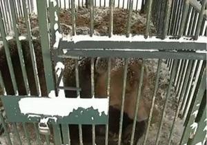 На Закарпатье открыли реабилитационный центр для бурых медведей