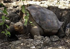 Ученые собираются  воскресить  галапагосских черепах