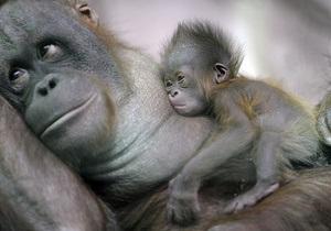 Ученые: Приматы стали семейными животными после отказа от ночной жизни
