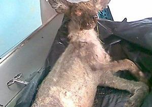 В Кировоградской области видели чупакабру с выводком детенышей
