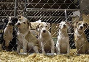 СМИ: В Киеве начали массово убивать бездомных собак