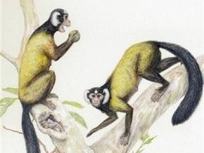 Ученые: Общий предок человека и обезьяны жил в Азии