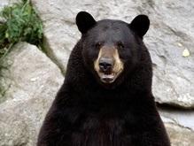 В США учитель на велосипеде сбил медведя