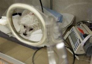 В Швейцарии убили собаку, за которую хозяйка не заплатила государственный налог