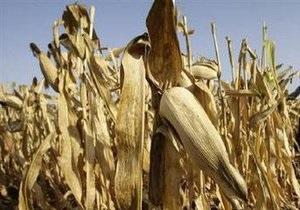 В Италии отказались выращивать генетически модифицированную кукурузу
