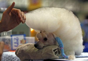 В Дубае открылся семизвездочный отель для домашних животных