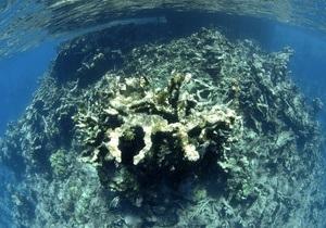 Триасово-юрское вымирание мог спровоцировать выброс сероводорода