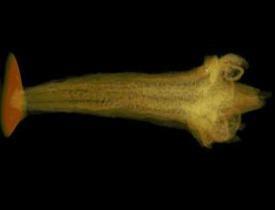 Ученые при помощи рентгена исследовали цветок возрастом 84 миллиона лет