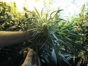 Американская газета открыла вакансию дегустатора марихуаны