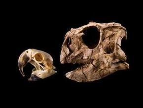 Ученые открыли орехоядного динозавра-попугая