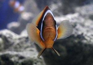 Американка обучила аквариумную рыбку музыке