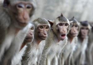 Исследование: Макаки способны различать своих сородичей на фотографиях