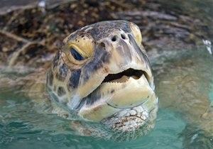 Новости Германии - новости о животных: В Германии разыскивают агрессивную черепаху