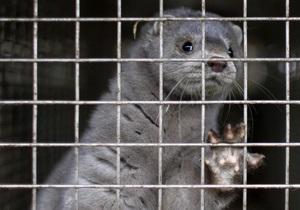 В Греции неизвестные взломали две фермы по выращиванию норок, 50 тысяч животных оказались на воле