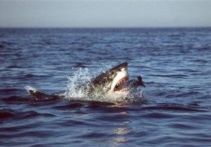 В Мексике акула напала на российскую туристку
