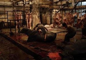 Украина запретила ввоз скота из Конго и Габона