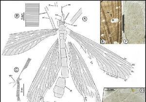 Ученые приняли древнее насекомое за растение