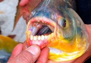 Туристу на заметку. В реках Швеции и Дании появилась рыба, атакующая мужские половые органы