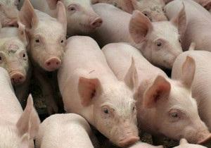 Донецкая область: свиной скандал с политическим подтекстом