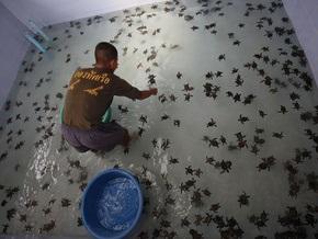 Фотогалерея: Тайские моряки спасают черепах от исчезновения