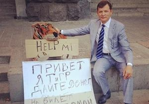В центре Киеве игрушечный тигр просит милостыню