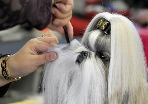 Сегодня в Киеве открывается Международная выставка собак