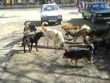 В Крыму стая собак покусала шестилетнюю девочку