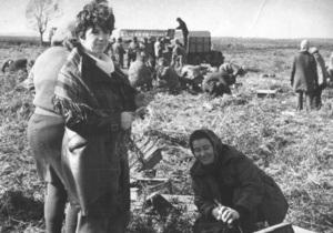 Корреспондент: По колхозам становись. Как представители советской интеллигенции ездили на сбор урожая