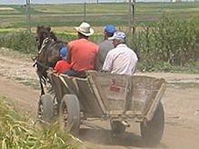 В селах Кировоградской области появились конные маршрутки