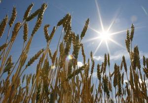 Биологи вывели сорт пшеницы, способный расти на подсоленной почве