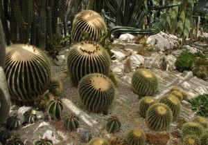 В Никитском ботаническом саду зацвели кактусы и агавы