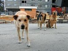 В Крыму на девочку напала стая собак: ребенок в реанимации