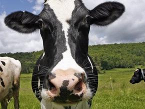 В Житомирской области корова искусала двоих мужчин