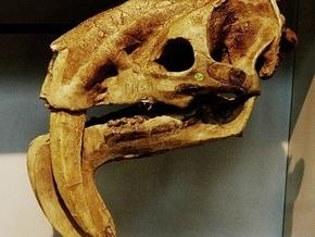 Голландские рыбаки обнаружили останки древних чудовищ в Северном море
