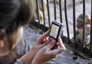 Ученые доказали, что обезьяны любят рассматривать посетителей зоопарка