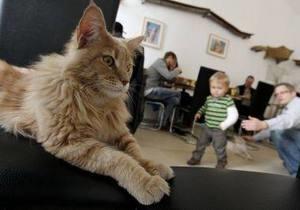 В Париже появится кафе с кошками