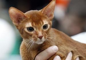 В Англии потерявшийся кот добрался до дома на сломанных лапах