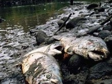 На дне Днепра гниют десятки тонн рыбы