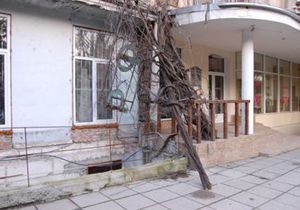 Непогода в Украине: в Ялте поваленные ветром деревья оборвали провода троллейбусных линий